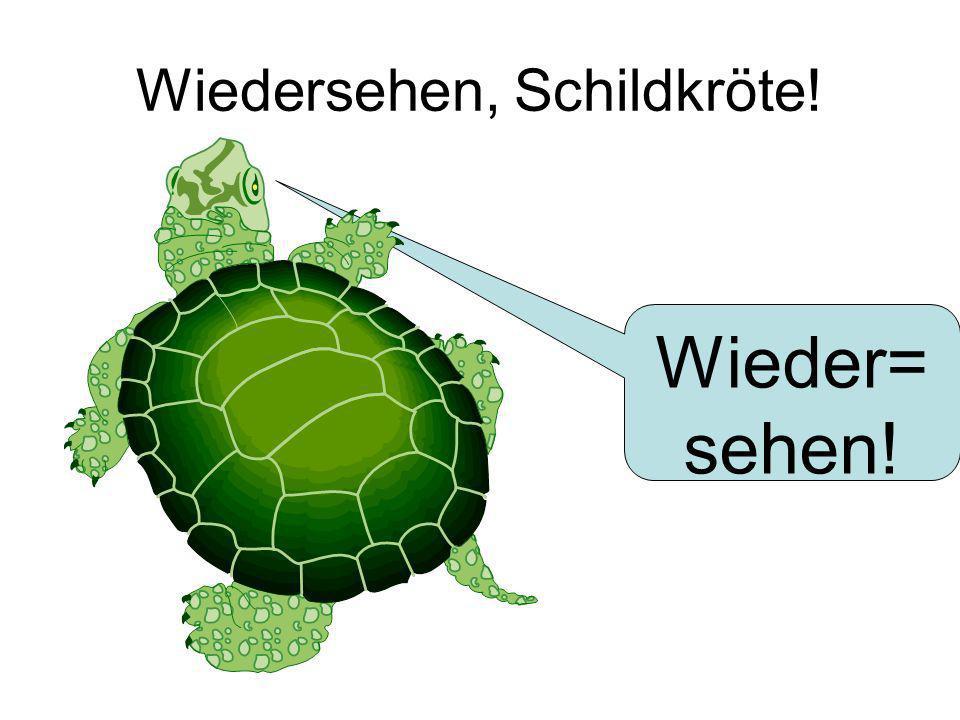 Wiedersehen, Schildkröte!