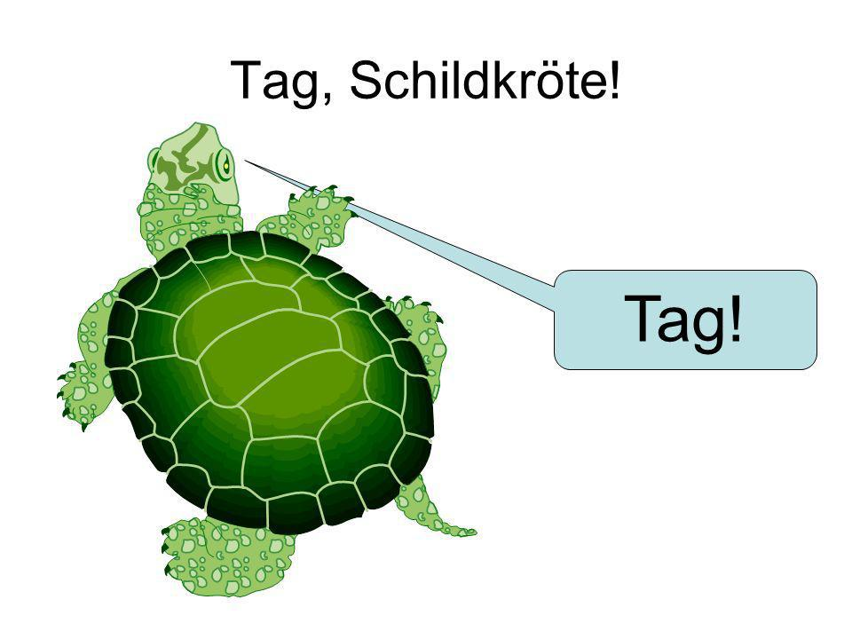 Tag, Schildkröte! Tag!