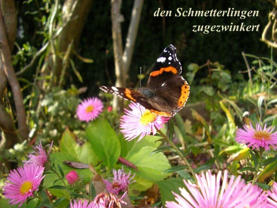 den Schmetterlingen zugezwinkert