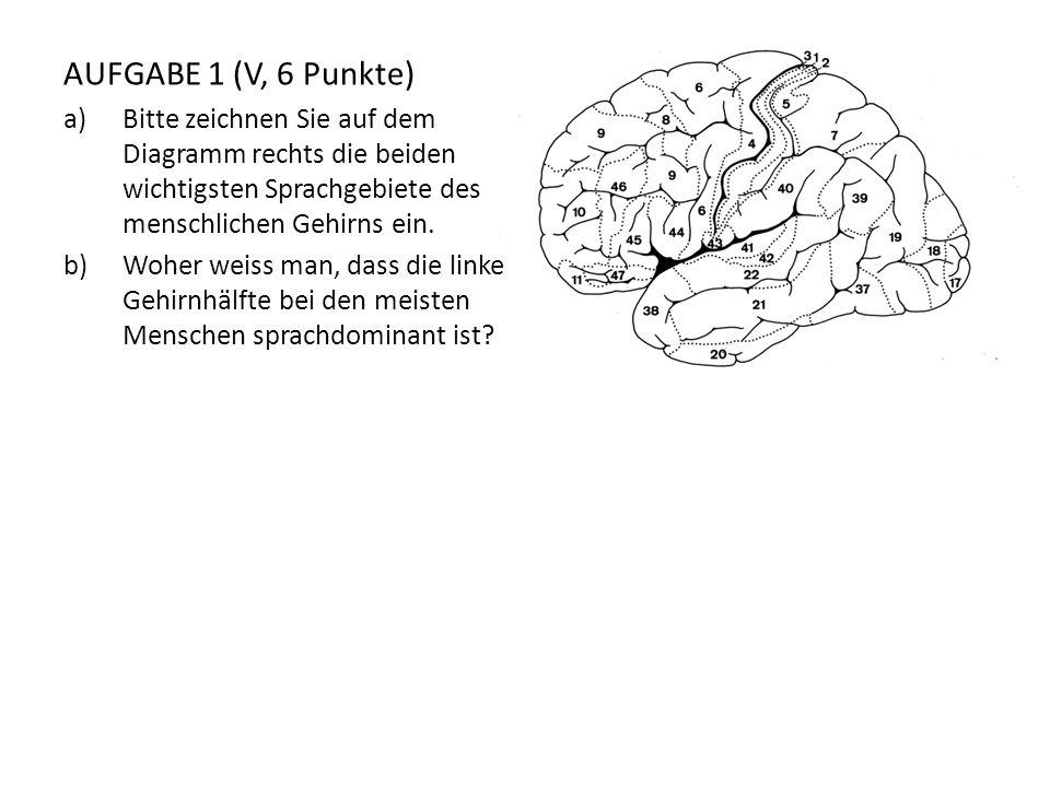 AUFGABE 1 (V, 6 Punkte) Bitte zeichnen Sie auf dem Diagramm rechts die beiden wichtigsten Sprachgebiete des menschlichen Gehirns ein.