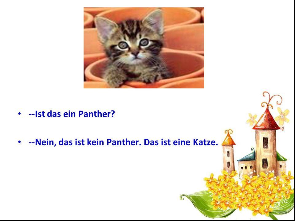 --Ist das ein Panther --Nein, das ist kein Panther. Das ist eine Katze.