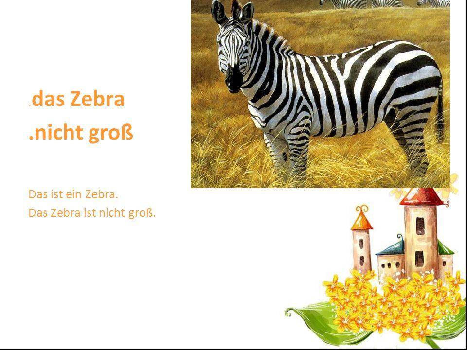 .das Zebra .nicht groß Das ist ein Zebra. Das Zebra ist nicht groß.