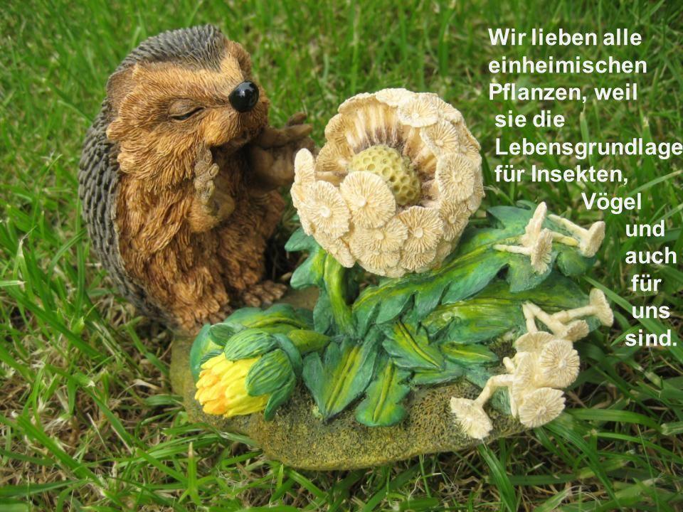 Wir lieben alle einheimischen. Pflanzen, weil. sie die. Lebensgrundlage. für Insekten, Vögel. und.