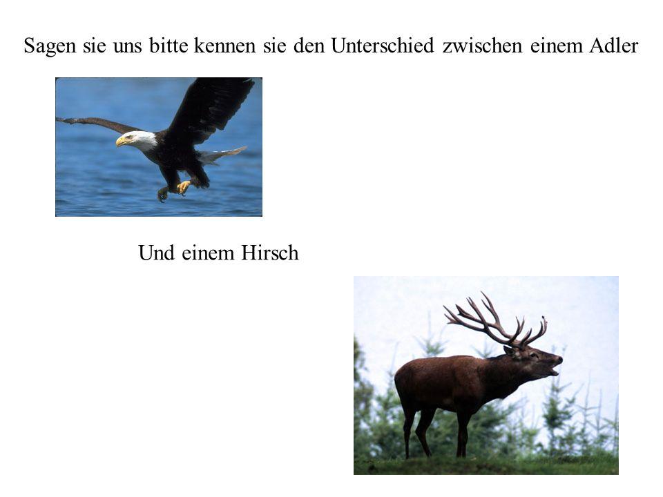 Sagen sie uns bitte kennen sie den Unterschied zwischen einem Adler