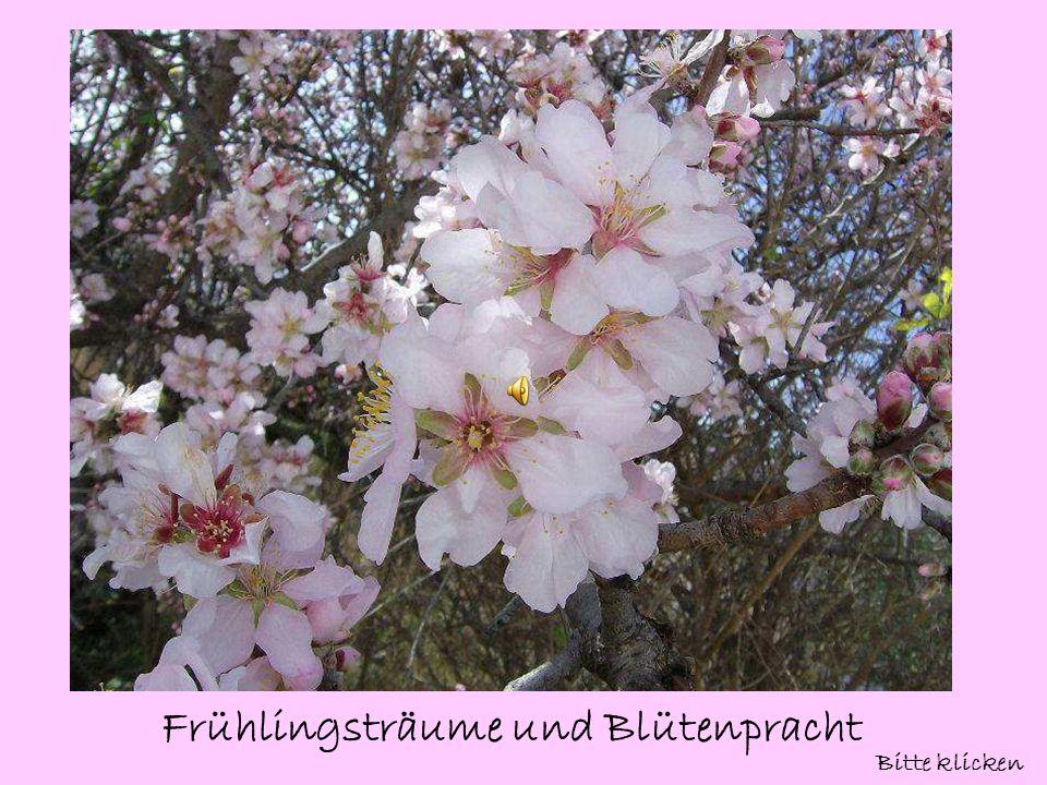 Frühlingsträume und Blütenpracht