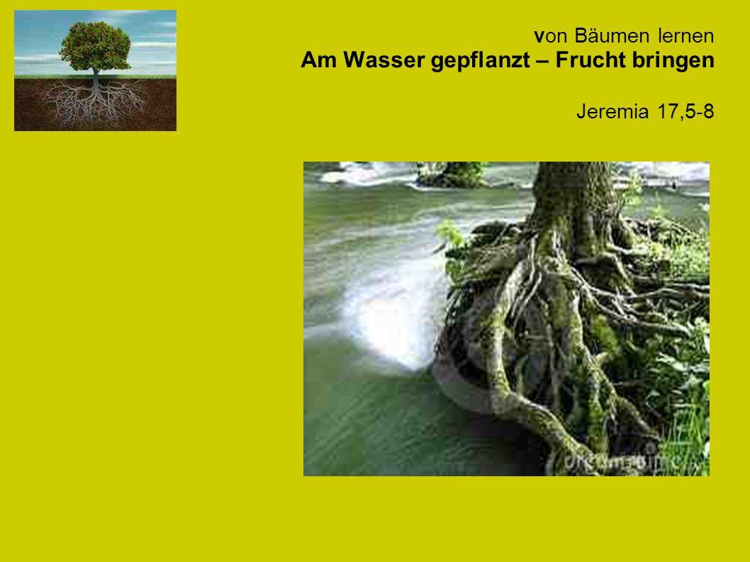 von Bäumen lernen Am Wasser gepflanzt – Frucht bringen Jeremia 17,5-8
