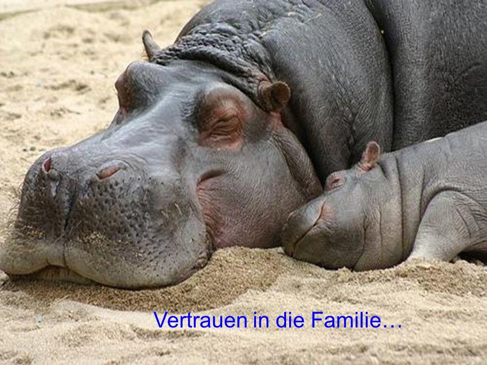 Vertrauen in die Familie…