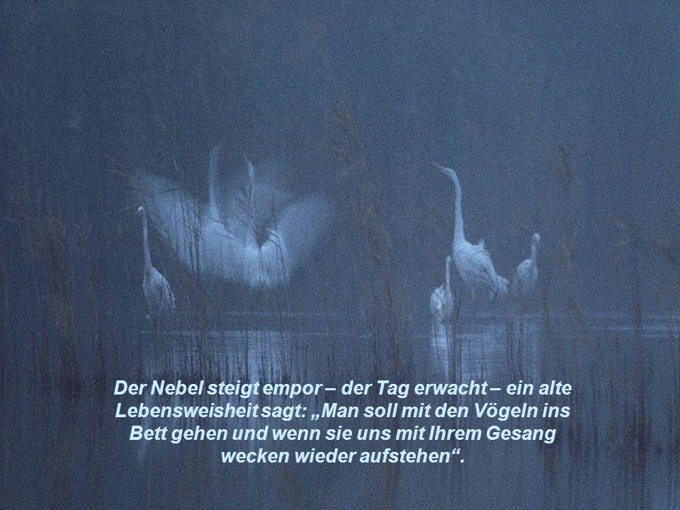 """Der Nebel steigt empor – der Tag erwacht – ein alte Lebensweisheit sagt: """"Man soll mit den Vögeln ins Bett gehen und wenn sie uns mit Ihrem Gesang wecken wieder aufstehen ."""