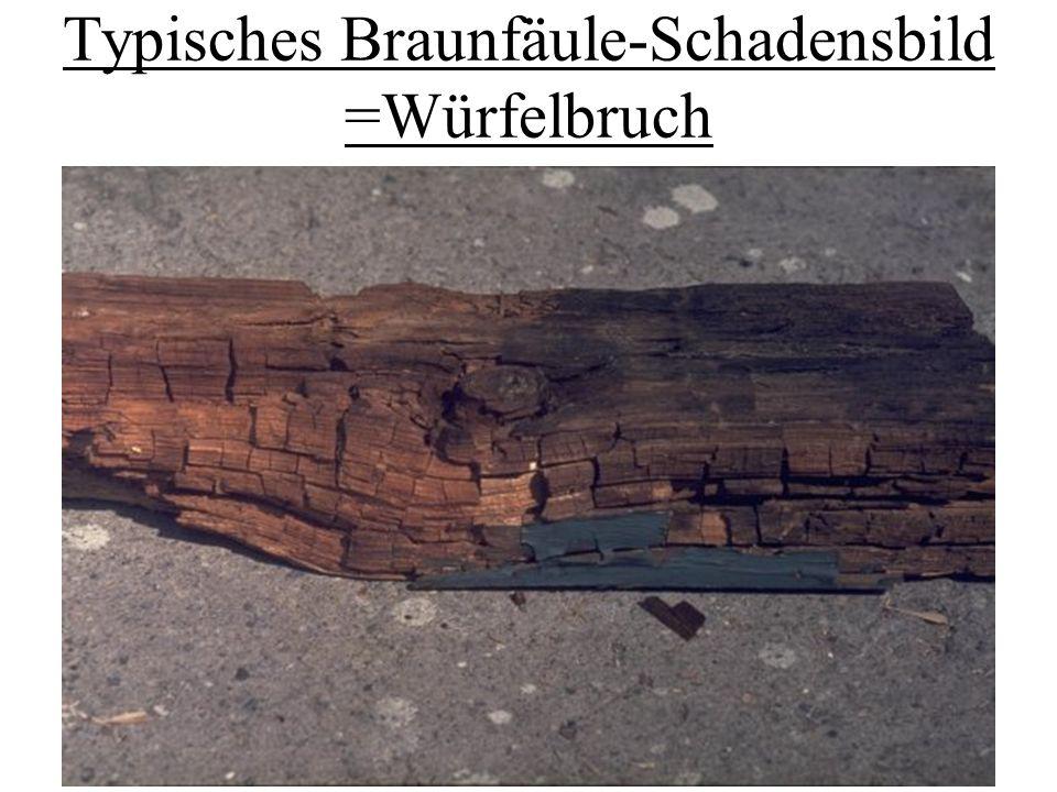 Typisches Braunfäule-Schadensbild =Würfelbruch