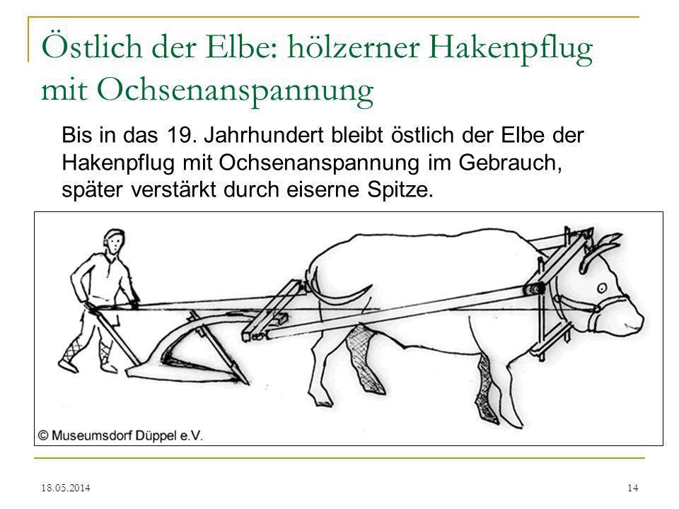 Östlich der Elbe: hölzerner Hakenpflug mit Ochsenanspannung