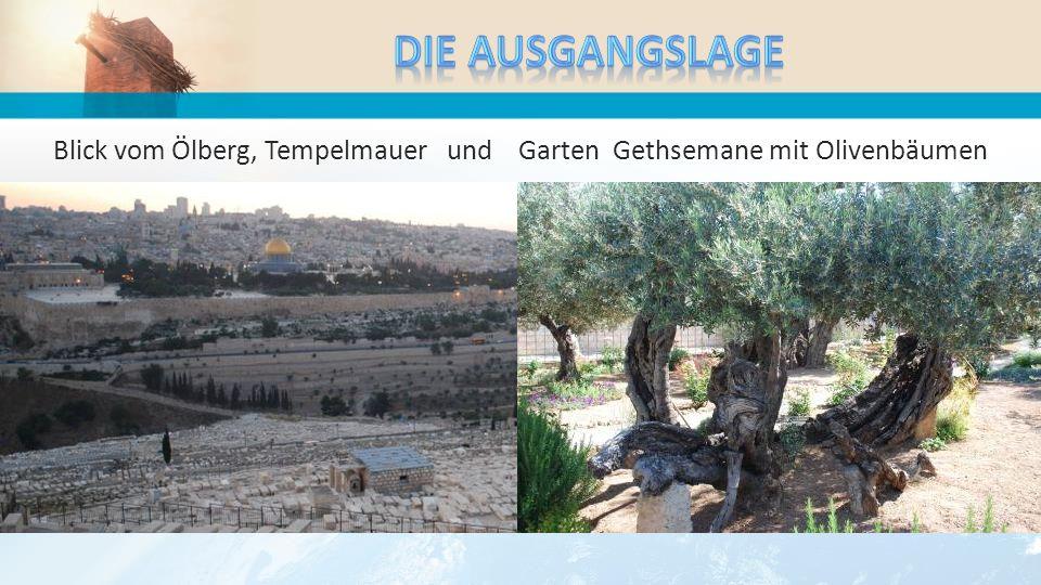 Blick vom Ölberg, Tempelmauer und Garten Gethsemane mit Olivenbäumen