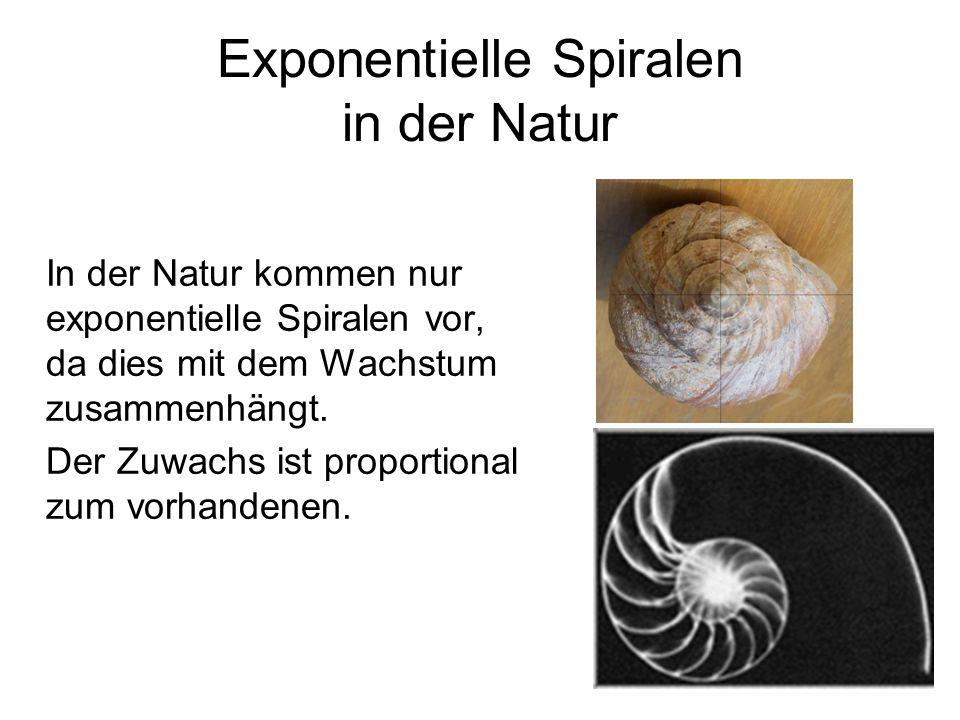 Exponentielle Spiralen in der Natur