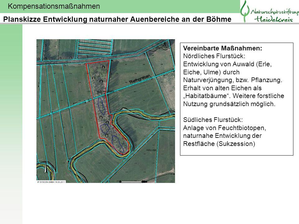 Planskizze Entwicklung naturnaher Auenbereiche an der Böhme
