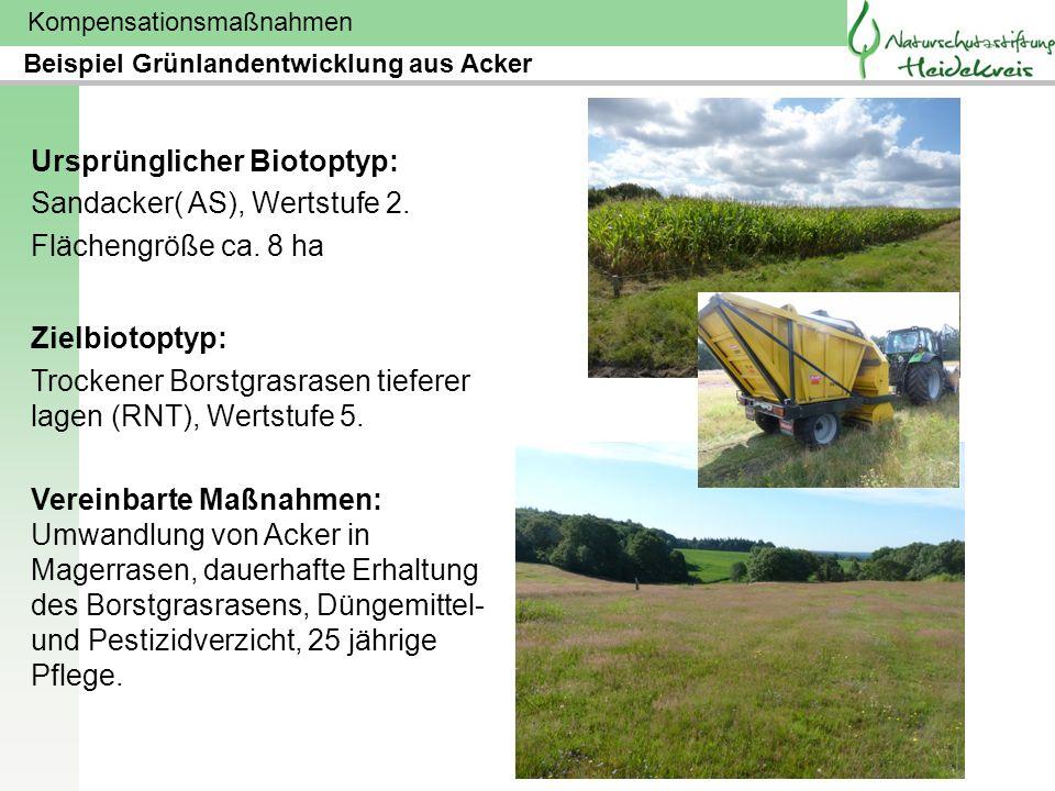 Ursprünglicher Biotoptyp: Sandacker( AS), Wertstufe 2.