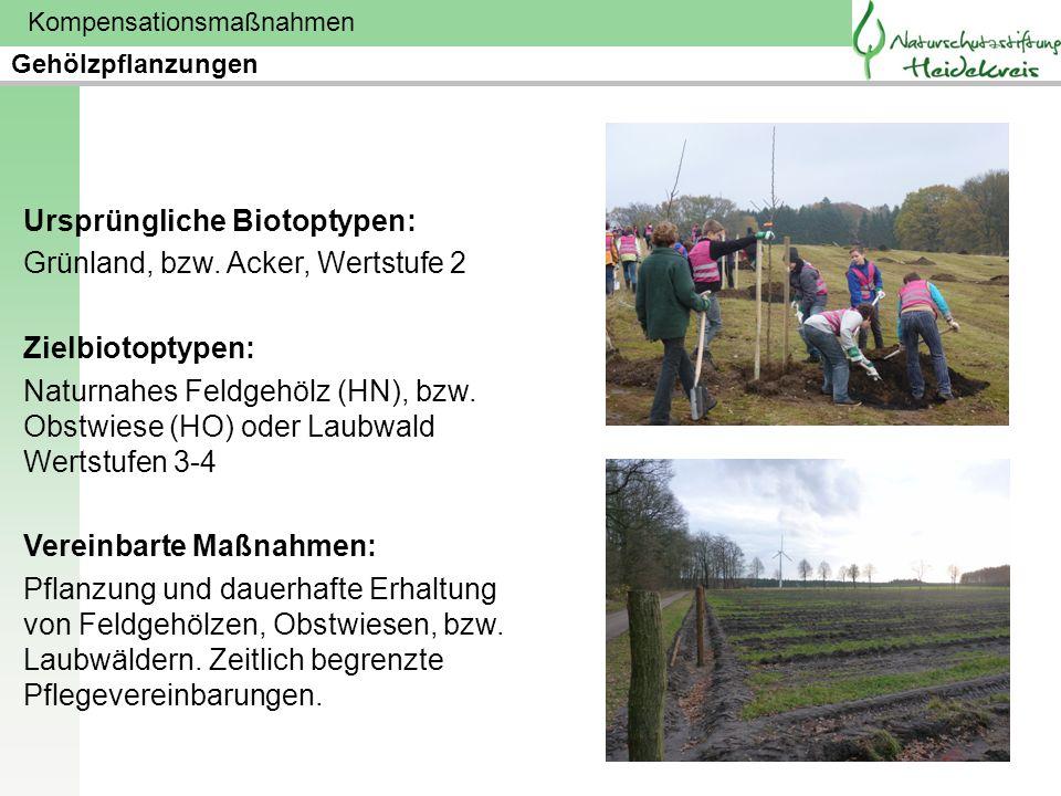 Ursprüngliche Biotoptypen: Grünland, bzw. Acker, Wertstufe 2