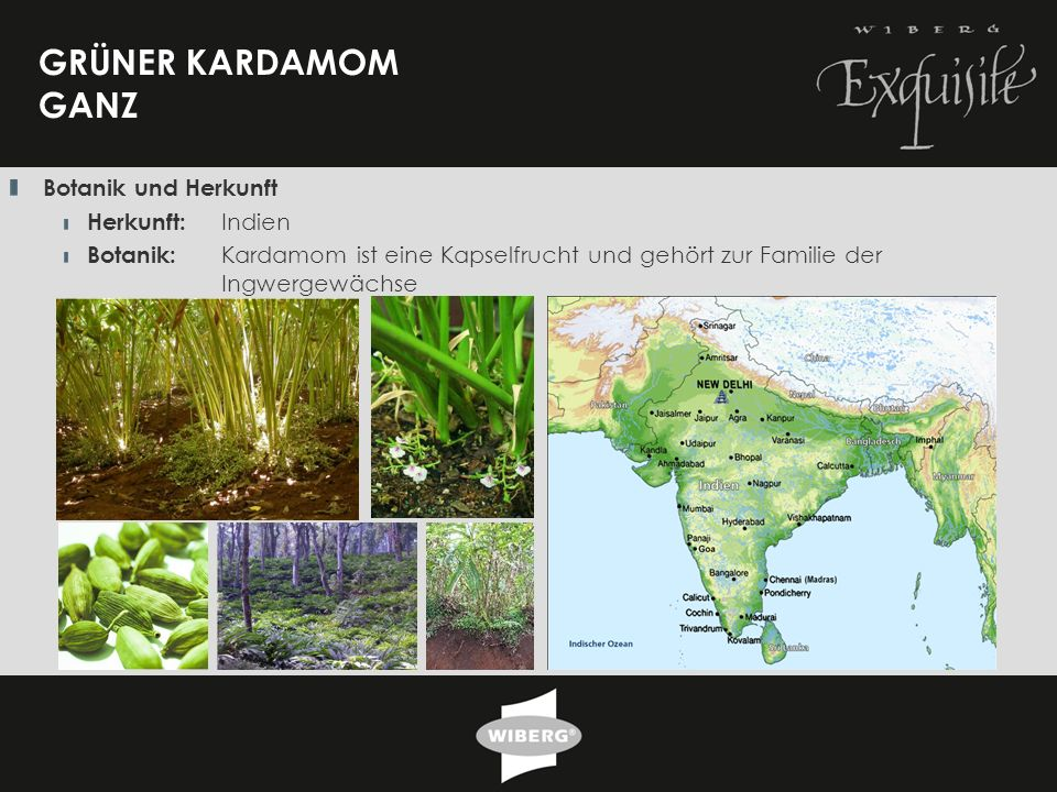 GRÜNER KARDAMOM GANZ Botanik und Herkunft Herkunft: Indien
