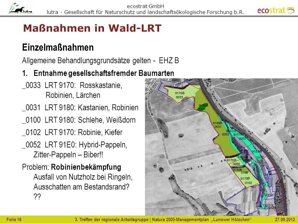 Maßnahmen in Wald-LRT Einzelmaßnahmen