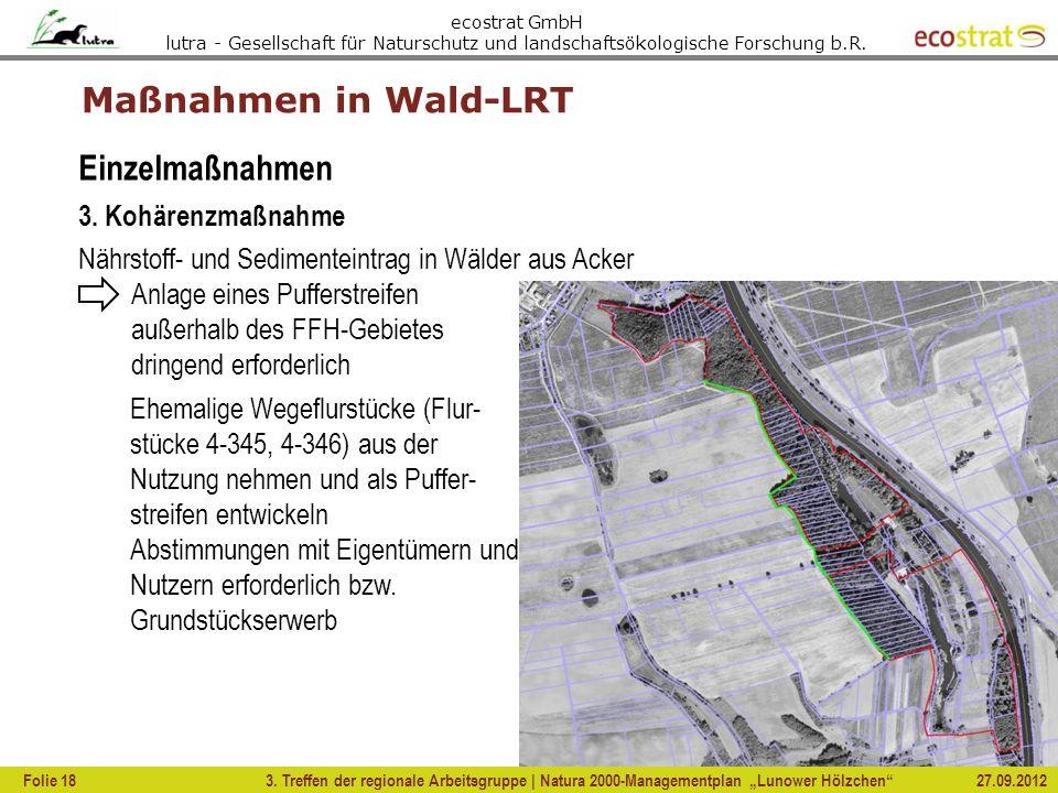 Maßnahmen in Wald-LRT Einzelmaßnahmen 3. Kohärenzmaßnahme