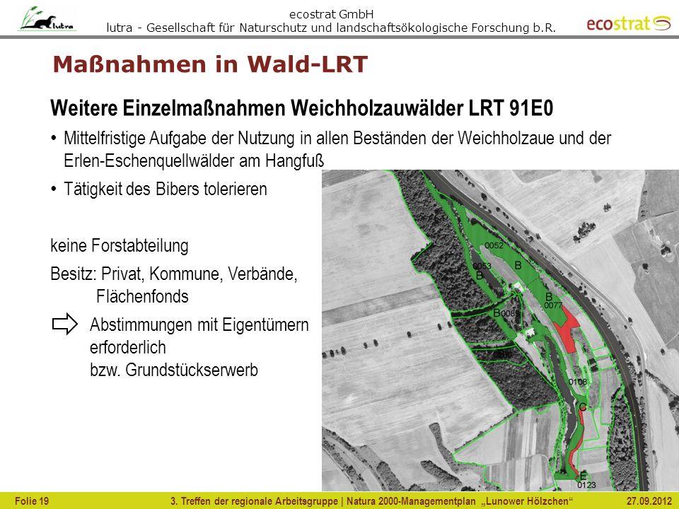 Weitere Einzelmaßnahmen Weichholzauwälder LRT 91E0