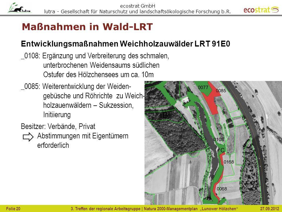 Maßnahmen in Wald-LRT Entwicklungsmaßnahmen Weichholzauwälder LRT 91E0