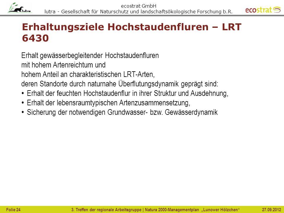 Erhaltungsziele Hochstaudenfluren – LRT 6430
