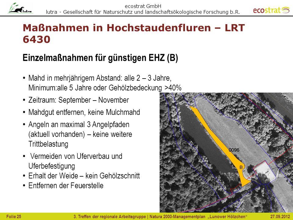 Maßnahmen in Hochstaudenfluren – LRT 6430