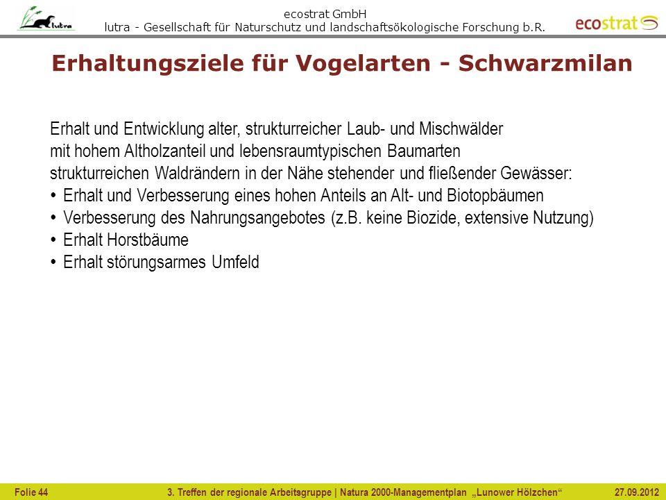 Erhaltungsziele für Vogelarten - Schwarzmilan