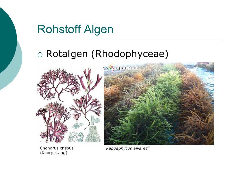 Rohstoff Algen Rotalgen (Rhodophyceae) Kappaphycus alvarezii
