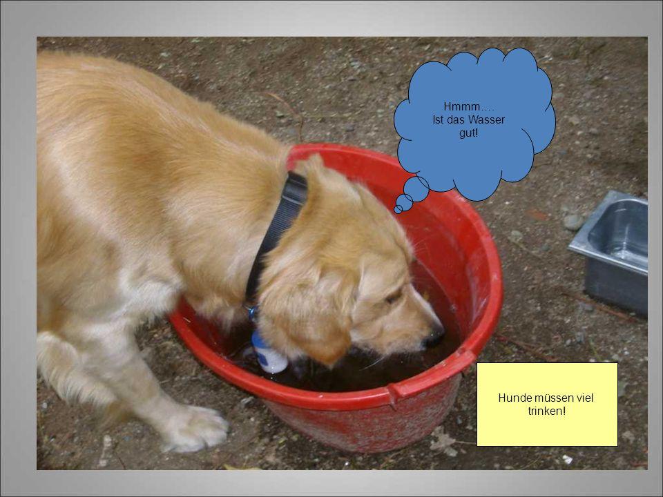 Hmmm…. Ist das Wasser gut! Hunde müssen viel trinken!