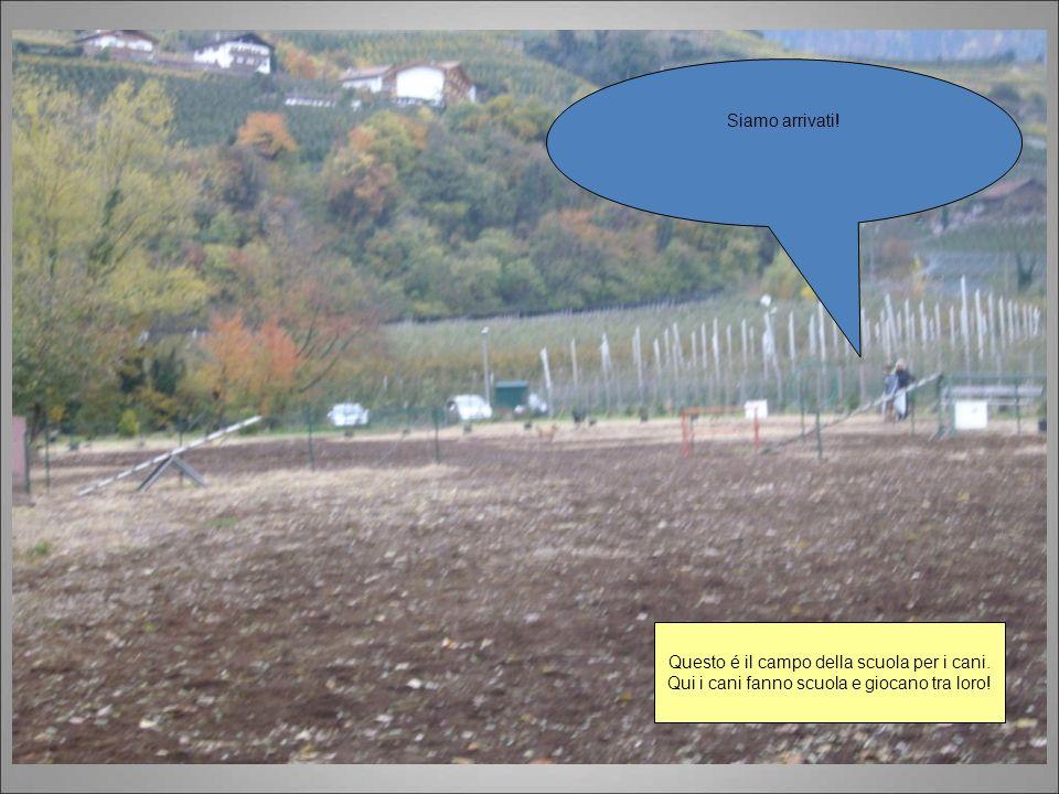 Questo é il campo della scuola per i cani.