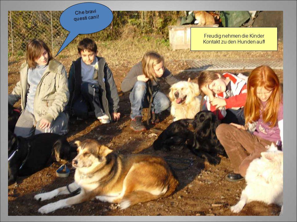 Freudig nehmen die Kinder Kontakt zu den Hunden auf!