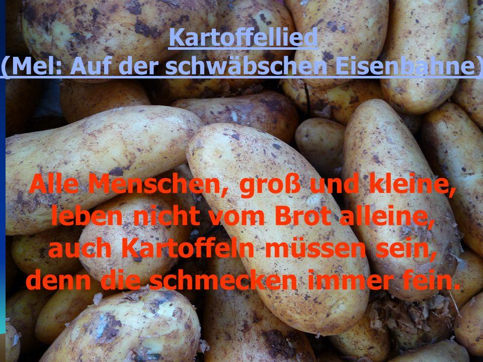 Kartoffellied (Mel: Auf der schwäbschen Eisenbahne) Alle Menschen, groß und kleine, leben nicht vom Brot alleine, auch Kartoffeln müssen sein, denn die schmecken immer fein.