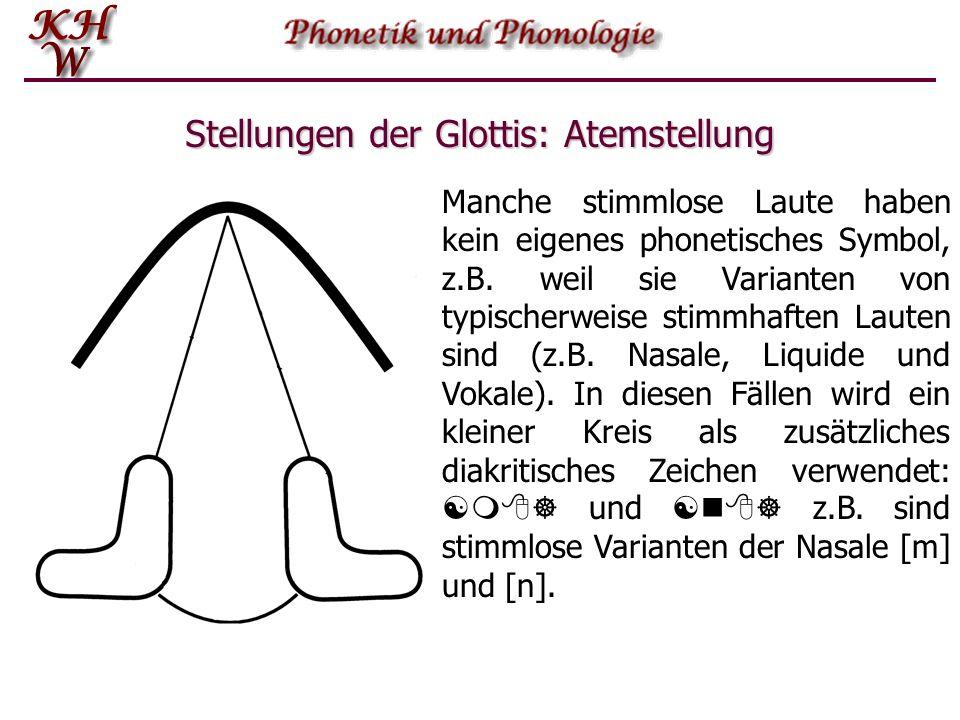 Stellungen der Glottis: Atemstellung