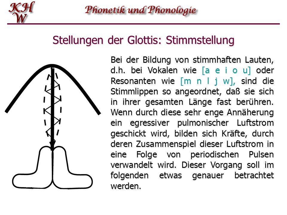 Stellungen der Glottis: Stimmstellung