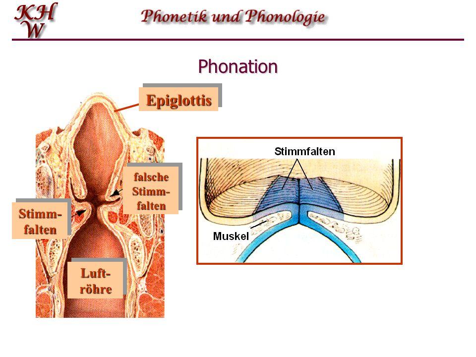Phonation Epiglottis Stimm-falten Stimm-falten Luft-röhre