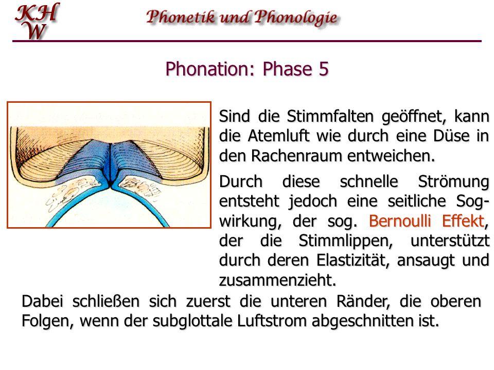 Phonation: Phase 5 Sind die Stimmfalten geöffnet, kann die Atemluft wie durch eine Düse in den Rachenraum entweichen.