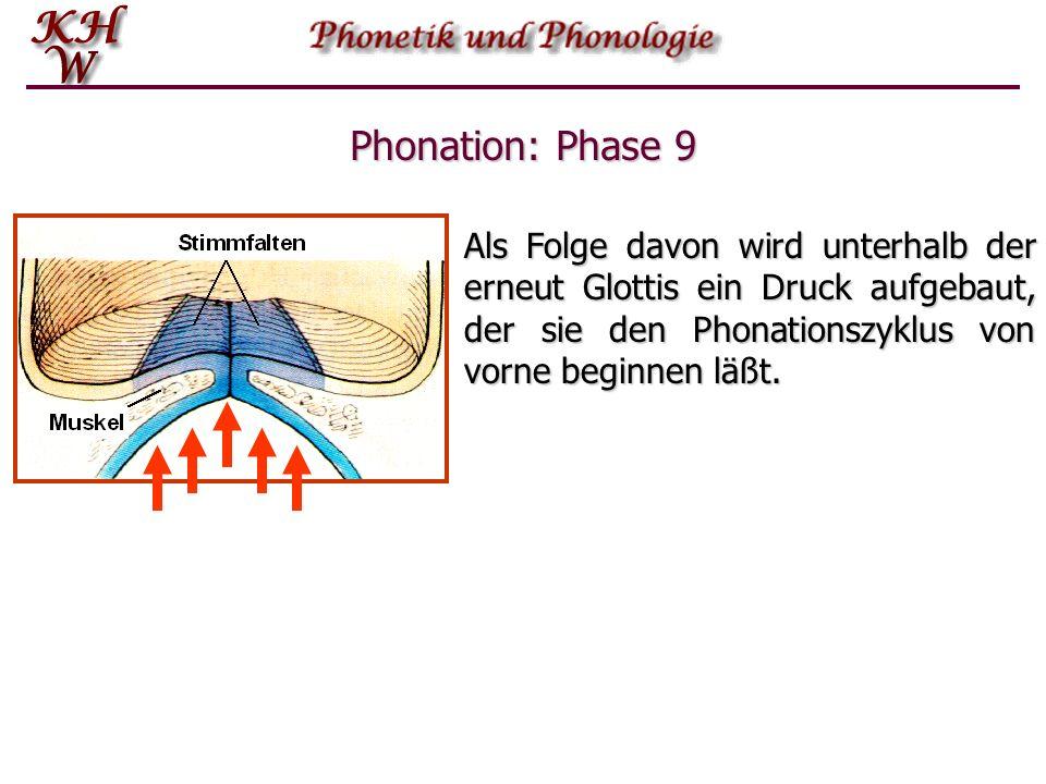 Phonation: Phase 9 Als Folge davon wird unterhalb der erneut Glottis ein Druck aufgebaut, der sie den Phonationszyklus von vorne beginnen läßt.