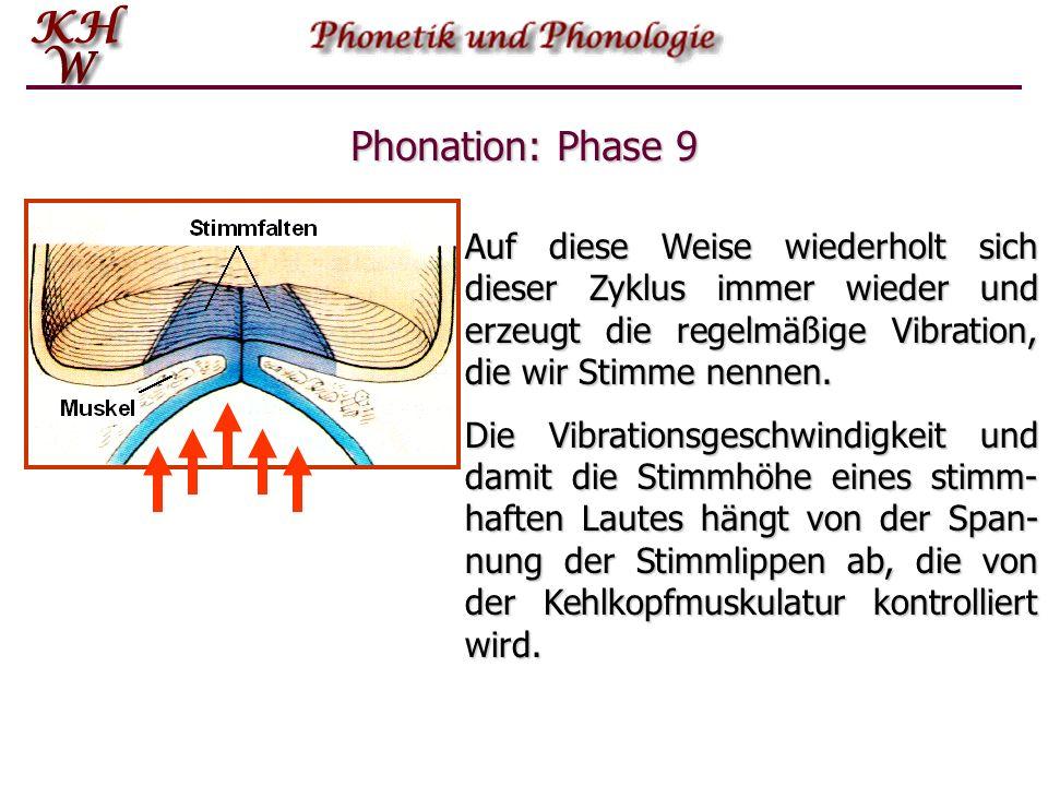 Phonation: Phase 9 Auf diese Weise wiederholt sich dieser Zyklus immer wieder und erzeugt die regelmäßige Vibration, die wir Stimme nennen.