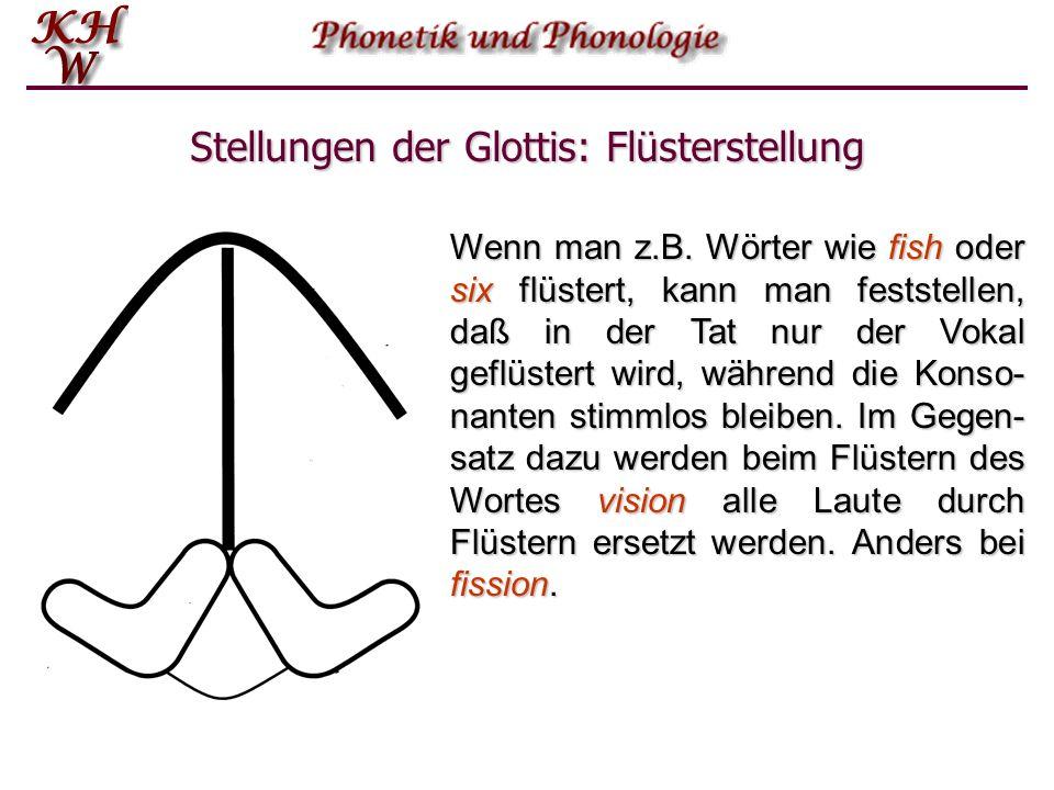 Stellungen der Glottis: Flüsterstellung