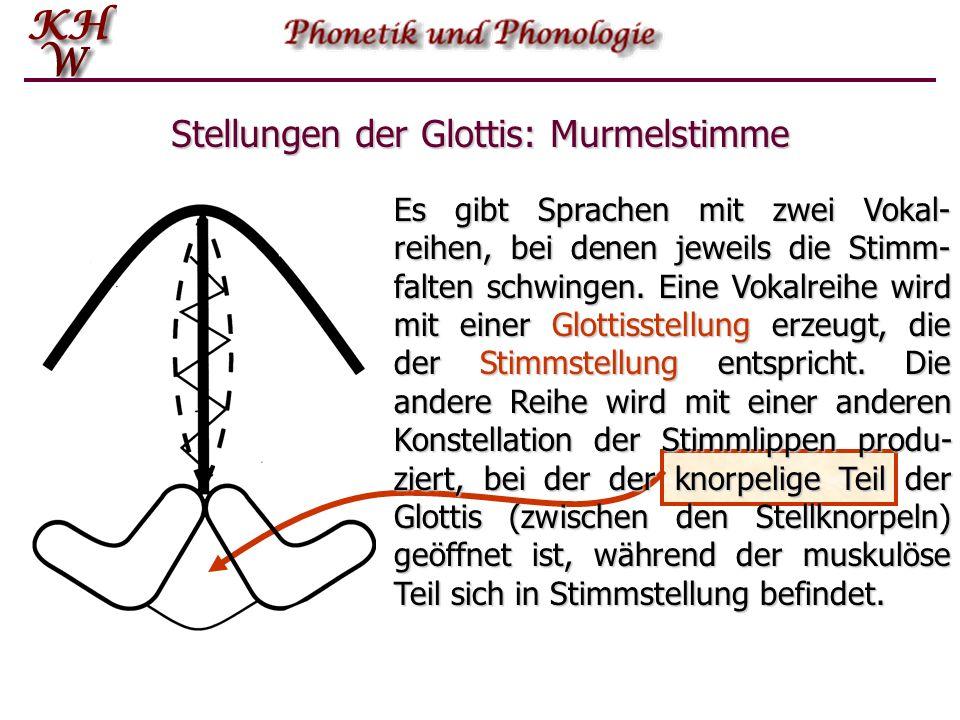Stellungen der Glottis: Murmelstimme