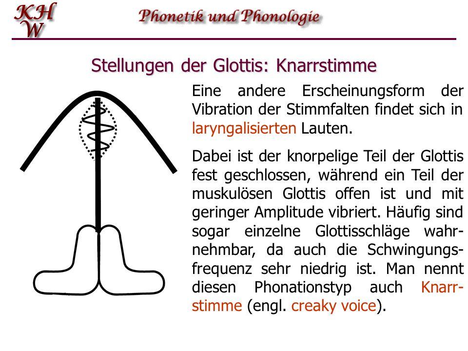 Stellungen der Glottis: Knarrstimme