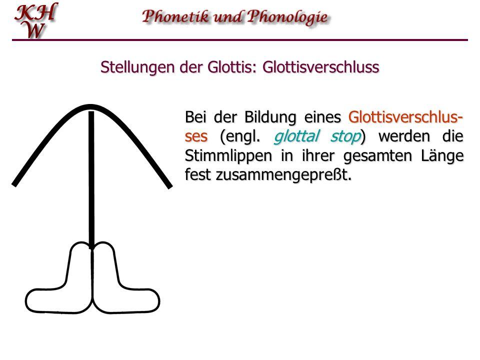 Stellungen der Glottis: Glottisverschluss