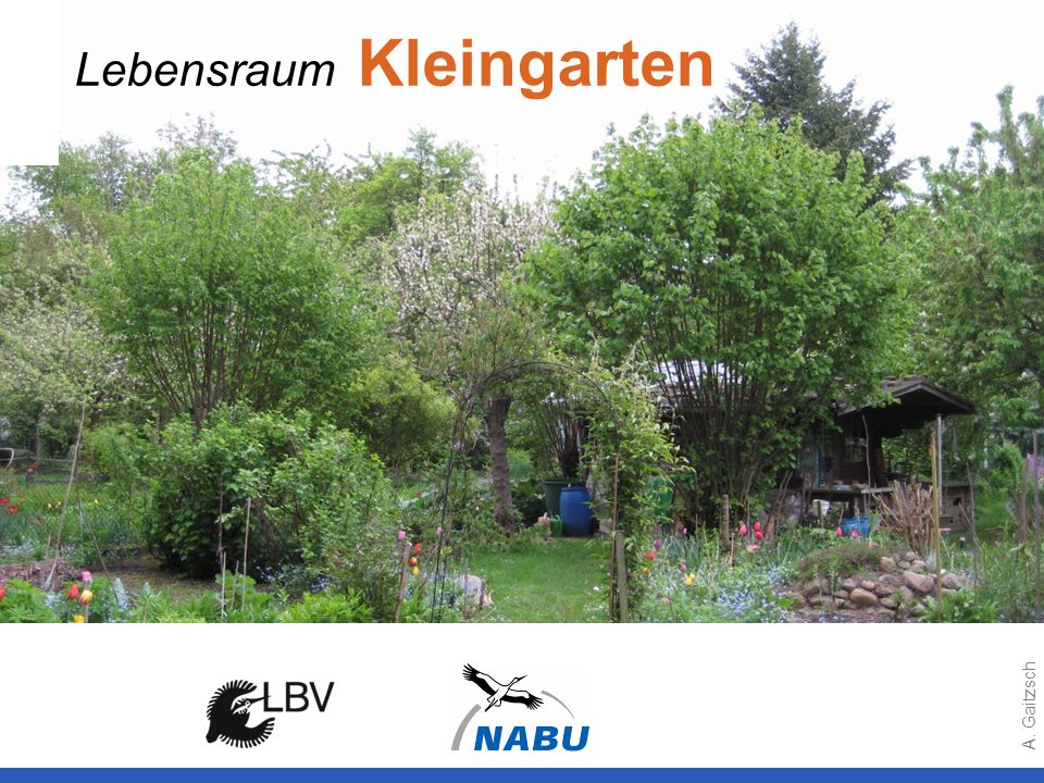 Lebensraum Kleingarten
