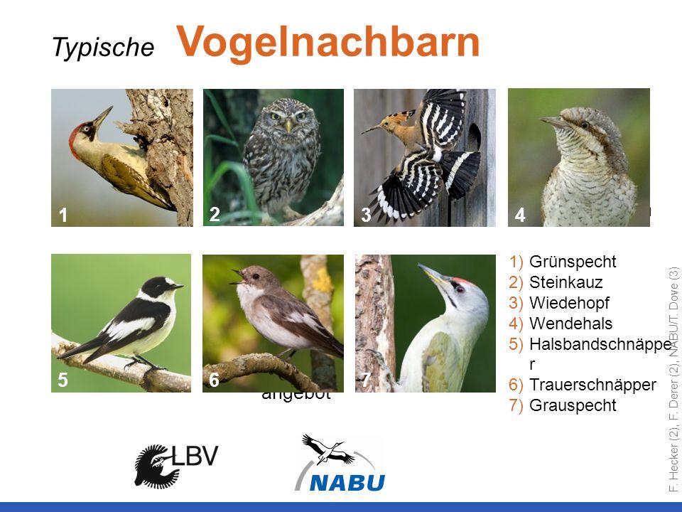 Typische Vogelnachbarn