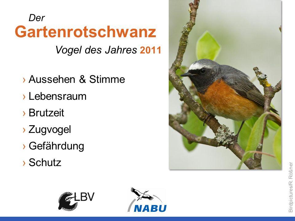 Gartenrotschwanz Vogel des Jahres 2011 Aussehen & Stimme Lebensraum