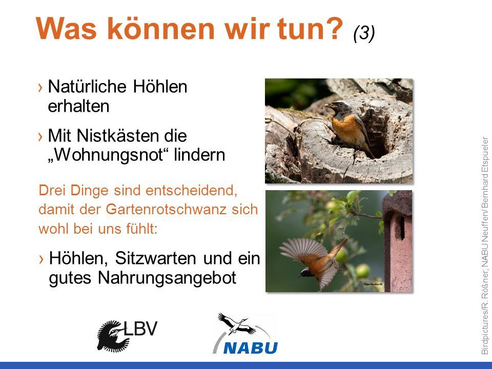 Was können wir tun (3) Natürliche Höhlen erhalten