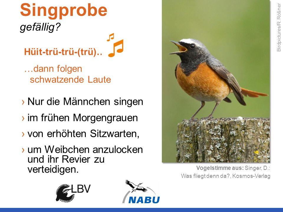 Singprobe gefällig Nur die Männchen singen im frühen Morgengrauen
