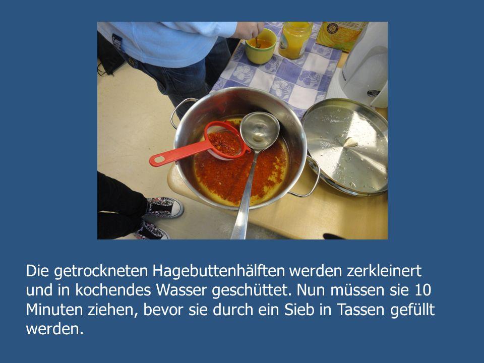 Die getrockneten Hagebuttenhälften werden zerkleinert und in kochendes Wasser geschüttet.