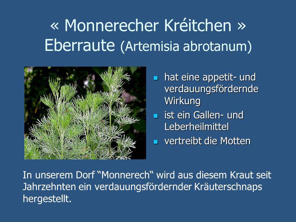 « Monnerecher Kréitchen » Eberraute (Artemisia abrotanum)