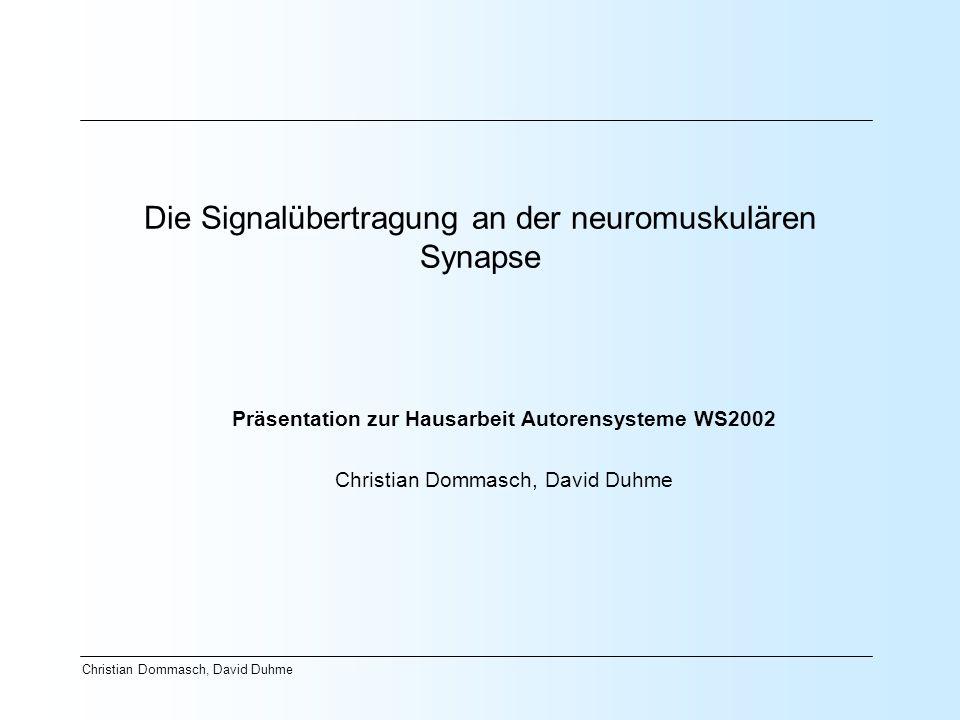 Die Signalübertragung an der neuromuskulären Synapse
